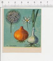 Image Papier Botanique Oignon Légume IM 14/46 - Vieux Papiers