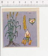 Image Papier Botanique épis De Blé Céréale IM 14/46 - Vieux Papiers