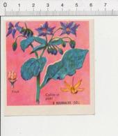 Image Papier Botanique Bourrache Fleur Plante IM 14/46 - Vieux Papiers