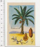 Image Papier Botanique Palmier-Dattier CP 1/201 - Vieux Papiers