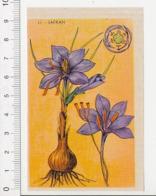 Image Papier Botanique Safran Fleur Plante CP 1/201 - Vieux Papiers