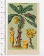 Image Papier Botanique Bananier Arbre Fruit Banane Régime De Bananes CP 1/201 - Vieux Papiers