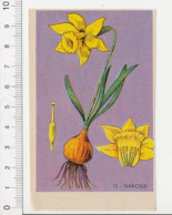 Image Papier Botanique Narcisse Fleur Bulbe CP 1/201 - Vieux Papiers