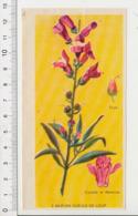 Image Papier Botanique Muflier Gueule De Loup Fleur CP 1/201 - Vieux Papiers