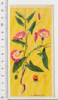 Image Papier Botanique Liseron Fleur CP 1/201 - Vieux Papiers