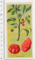 Image Papier Botanique Tomate Fruit Plante Légume Fleur CP 1/201 - Vieux Papiers