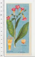 Image Papier Botanique Tabac Plante Fleur CP 1/201 - Vieux Papiers