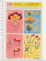 Image Papier Botanique Montage Diorama Primevère + Gentiane Bruyère Plante Fleur 226CH20 - Vieux Papiers