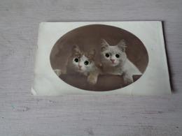 Chat ( 113 )  Kat  -  Avec Des Yeux En Verre - Chats