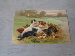 Chat ( 124 )  Kat  -  Carte Gaufrée  Reliëf - Chats