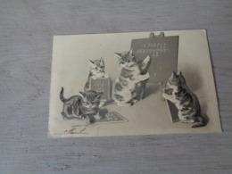 Chat ( 139 )  Kat  -  Carte Gaufrée  Reliëf  -  Chat Personalisé - Chats