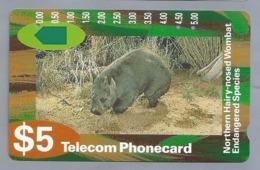 AU.- Telelecom Phonecard $5. Northern Hairy-nosed Wombat Endangered Species. Australia. AUSTRALIE N920522 -0000025426058 - Telefoonkaarten
