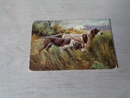 Chien ( 596 )  Hond   Chien De Chasse  Jacht - Chiens