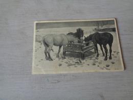 Carte ( 349 ) Fantaisie  Fantasie - Thème Animal  Dier  :   Paard   Cheval - Chevaux