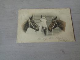 Carte ( 350 ) Fantaisie  Fantasie - Thème Animal  Dier  :   Paard   Cheval - Chevaux