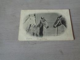 Carte ( 351 ) Fantaisie  Fantasie - Thème Animal  Dier  :   Paard   Cheval - Chevaux