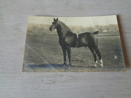 Carte ( 352 ) Fantaisie  Fantasie - Thème Animal  Dier  :   Paard   Cheval  -  Carte Photo  Fotokaart - Paarden