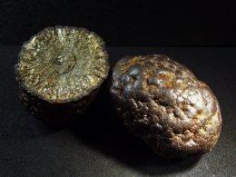 Marcassite Floaters -  2 Specimen - Wimereux - Pas De Calais - France - Mineralen
