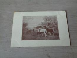 Carte ( 356 ) Fantaisie  Fantasie - Thème Animal  Dier  :   Paard   Cheval - Veeverzekering  ' S - Gravenhage  Den Haag - Chevaux