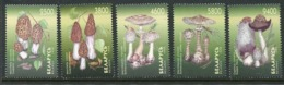 BELARUS 1998 Fungi  MNH / **. Michel 280-84 - Bielorrusia