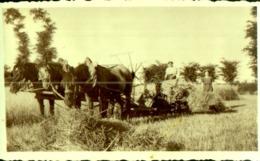 2 Photographies Scène De  Battage Du Blé Avec Les Chevaux , Agriculture , 5 Chevaux De Trait , Coupe Du Blé - Métiers