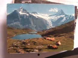 Zwitserland Schweiz Suisse BE Grindelwald Bachsee Und Kühe - BE Berne
