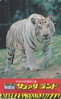Télécarte Japon / 110-011  - Animal Felin - TIGRE BLANC - WHITE TIGER Feline Japan Phonecard Telefonkarte - 426 - Selva