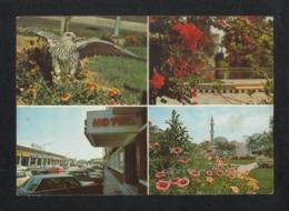 Qatar 4 Scene Picture Postcard Qatari Falcan . Rayan Gardens . Musharib Street . Grand Mosque  View Card - Qatar