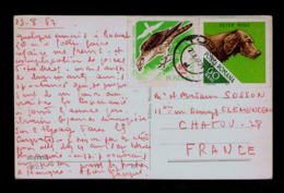 Falco Cherrug Aigles Birds Animals Faune Oiseaux Faune Animals Setter Dogs Chiens 1967 ROMANIA Postcards Gc4370 - Aigles & Rapaces Diurnes