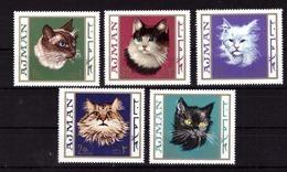 Ajman. Cats - Hauskatzen