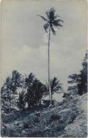 Timor Português - Um Coqueiro Altissimo (Lautem) - East Timor