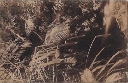 Timor Português - Trecho De Vegetação No Interior - Timor Oriental