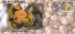 India  2019  Kashmir Walnut  Dry Fruit  Srinagar  Special Cover  # 23396     C&D Inde  Indien - Fruits