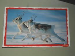 CANADA NUNAVUT DASHING THROUGH THE SNOW ON CANADA'S ELLESMERE ISLAND DIMINUTIVE OEARY CARIBOU... - Nunavut