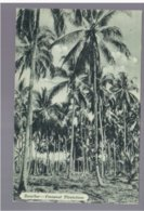 TANZANIA Zanzibar Cocoanut Plantations Ca 1920 Old Postcard - Tanzania