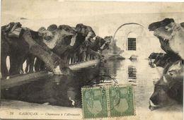 CPA TUNISIE KAIROUAN - Chameux A L'abreuvoir (148671) - Tunesien