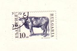 BULGARIE 1991 VACHE  YVERT N°3362 OBLITERE - Farm