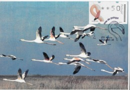 CARTE MAXIMUM - MAXICARD - MAXIMUM KARTE - MAXIMUM CARD - PORTUGAL - OISEAUX - FLAMANT - Phoenicopterus Ruber - Flamencos