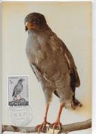 CARTE MAXIMUM - MAXICARD - MAXIMUM KARTE - MAXIMUM CARD - ANGOLA - OISEAUX  - AIGLE ROYAL - Aquila Crysaetos - Águilas & Aves De Presa