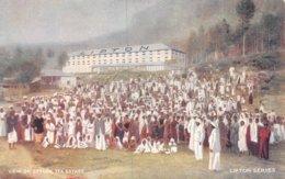 A-19-5432 : VIEW OF CEYLON TEA ESTATE.  LIPTON SERIES. - Sri Lanka (Ceylon)