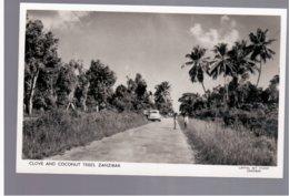 TANZANIA Zanzibar. Clove And Coconut Trees Old Photo Postcard - Tanzania