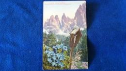 Enzian-Gentiana Kurzblättriger Enzian-Gentiana Brachyphylla Switzerland - Svizzera