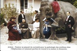 HUMOUR  ARBOIS- PASTEUR PATHOLOGIE DES OREILLONS CHEZ L'ÉLÉPHANT - Humour