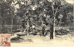 - COCHINCHINE - 201-ONG-YÊM - Plantation D'Hévéas -  Sans éditeur - Viêt-Nam