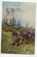 LAPINS Et GIbier De CHASSE Illustrateur écrite 1906 Timbrée   D17 2019 - Animali