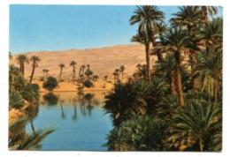 ALGERIA - AK 363131 Oasis Dans Les Dunes - Algeria