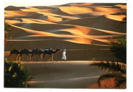 ALGERIA - AK 363135 Caravan Near Timimoun - Sahara Desert - Algeria