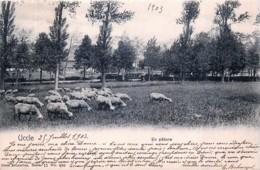 Nels Série 11 N° 490 - Uccle - En Pâture - Brussel (Stad)