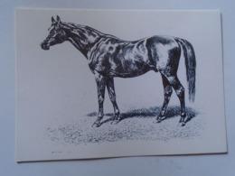 D168615 Horses Cheval Pferde - Hungary - V.C.G. Specht : DONCASTER  -Race -Racing- Photo Alapfy Attila - Caballos