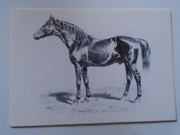 D168616 Horses Cheval Pferde - Hungary - V.C.G. Specht : NORTH STAR IV  -Race -Racing- Photo Alapfy Attila - Caballos